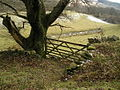 Gate to Cae Mawr - geograph.org.uk - 144068.jpg