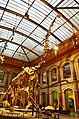 Giraffatitan brancai, Berlin Natural History Museum (2) (39472249944).jpg