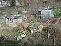 Gledhow Valley Allotments 18 March 2019 3.jpg