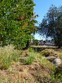 Glendale, AZ, Irrigation Ditch, 2013 - panoramio.jpg
