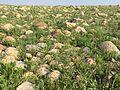 Grass and rocks Erbil.jpeg