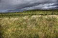 Grasses (8051044333) (2).jpg