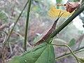 Grasshopper20170925 172747.jpg