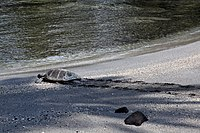 Photo of turtle walking on beach