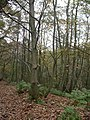 Greensand Way - geograph.org.uk - 84692.jpg