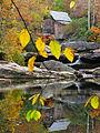 Grist-mill-reflections - West Virginia - ForestWander.jpg