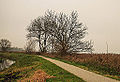 Groep essen (Fraxinus excelsior) aan fietspad om Langweerderwielen (Langwarder Wielen). Oostkant 02.jpg