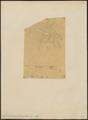 Gymnocorvus fuscicapillus - 1833-1860 - Print - Iconographia Zoologica - Special Collections University of Amsterdam - UBA01 IZ15700273.tif