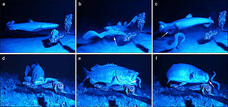 Anti-predator adaptation Defensive feature of prey for selective advantage