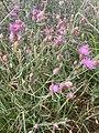 Halberstad Flora Pflanzen Harz 22 02 59 816000.jpeg