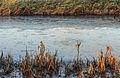 Half bevroren Jonkersloot bij zonsopgang. Locatie, De Famberhorst 03.jpg