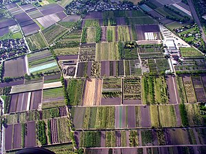 Halstenbek - Plant nursery fields