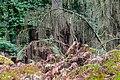 """Haltern am See, Hohe Mark, Naturschutzgebiet """"Hohemarkenbusch"""" -- 2021 -- 6531.jpg"""