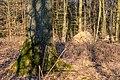 Haltern am See, Naturpark Hohe Mark -- 2018 -- 1306.jpg