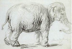 Hansken - A sketch of Hansken by Rembrandt (1637)