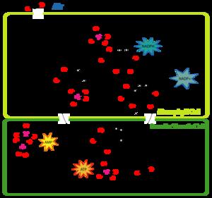 Portal:Molecular and cellular biology - Wikipedia