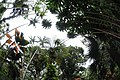 Hawaii Tropical Botanical Garden - panoramio (1).jpg