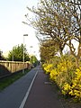 Hedon Road Cycle Track - geograph.org.uk - 801034.jpg