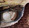Helix pomatia hibernation.png