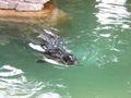 Henry Vilas Zoo IMG 2363.jpg