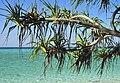 Heron Island 06.jpg
