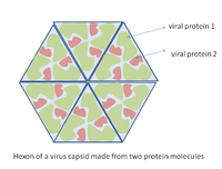 Virus Wikipedia La Enciclopedia Libre