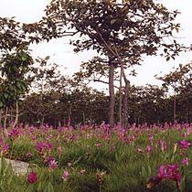 Hin Ngam forest.jpg