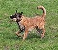 HiperParada animalelor la CORA (4549207038).jpg