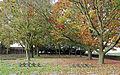 Hooglede Soldatenfriedhof R05.jpg