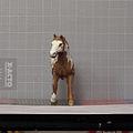 Horse-Front.jpg
