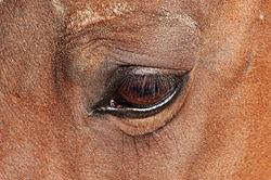 meaning of eyelash