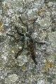 Hunting wasp 1280370 cr.jpg