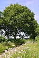 Hussey's Lane, Well, Long Sutton - geograph.org.uk - 200521.jpg