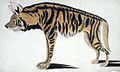 Hyena (6124598179).jpg