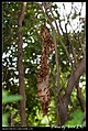 Hymenoptera (6022579102).jpg