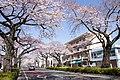 Ibaraki Prefectural Route-293 06.jpg