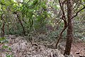 Impressions of Chumbe Island (7).jpg