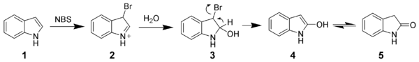 Oxidation of indole by N-bromosuccinimide