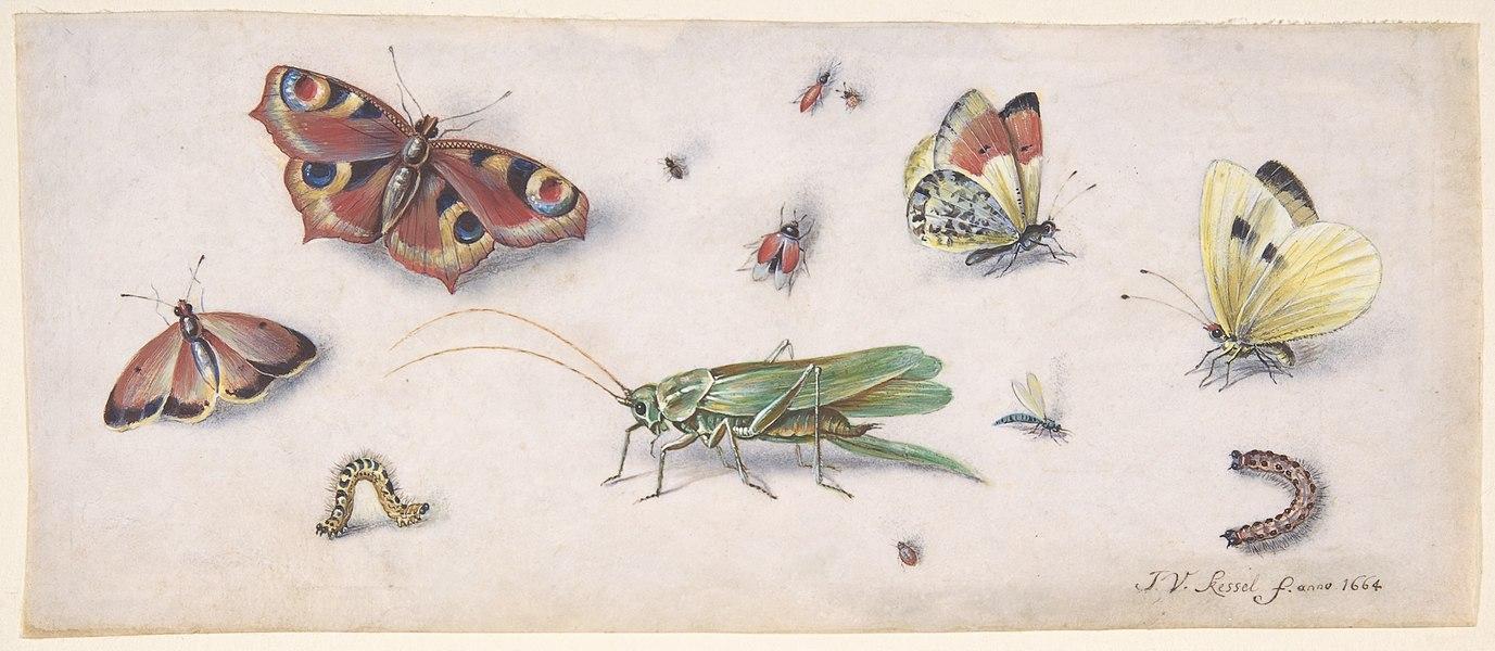 butterflies - image 6