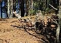 Isoniemi Oulu 20140529.jpg