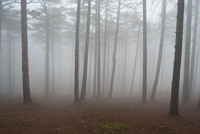 Jalta mount reserve fog.jpg