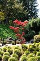 Japanese Friendship Garden (4527094242).jpg