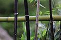 Jardin japonais Toulouse (8602167561).jpg