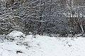 Jardin naturel (Paris) sous la neige 16.jpg