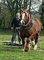 Jean-Jacques Séité et son hongre Oscar lors de la fête du cheval de Plougras (22).jpg