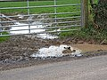 "Jemima Puddleduck and ""friend"" - geograph.org.uk - 316262.jpg"