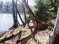 Jezioro Dłużek (1).JPG