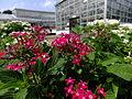 Jindai Plants Park 5.jpg