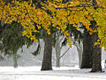Johnston Green and first snow.jpg