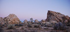 Joshua Tree - Cyclops + Potato Head - Sunrise.jpg